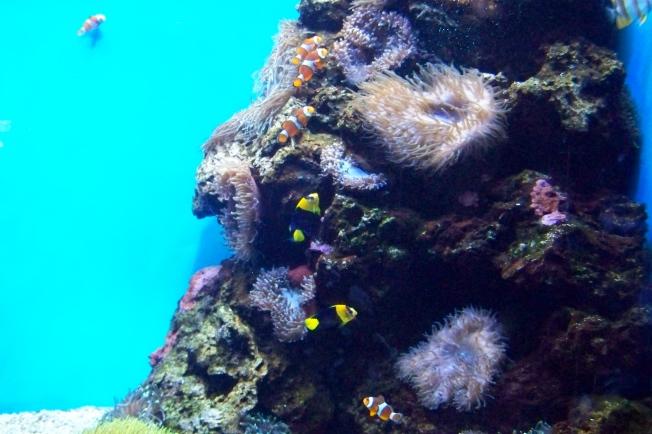 Honolulu Aquarium